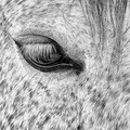 The eye of the Zephyr