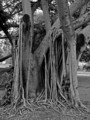 crying roots