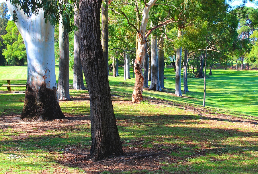 Trees in Perth
