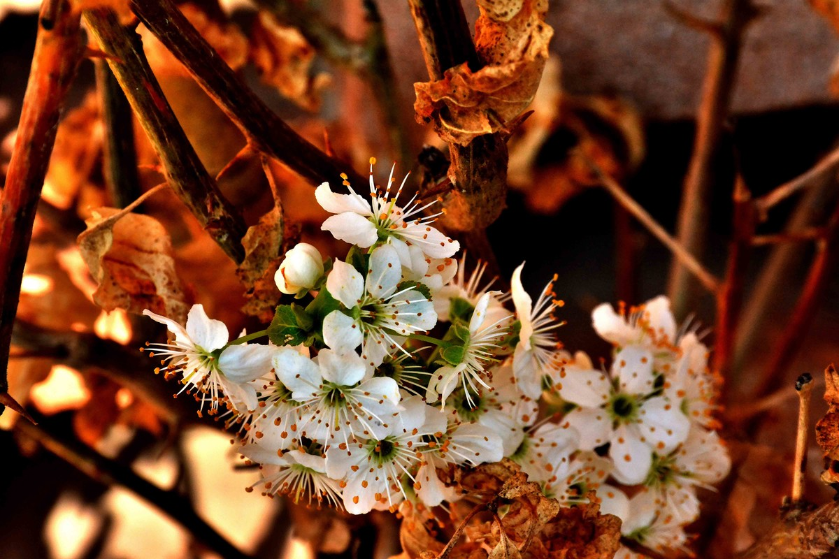 spring brings white