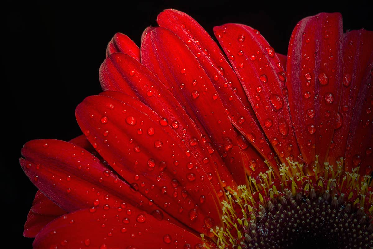Flowers Bring Color to Our Lives