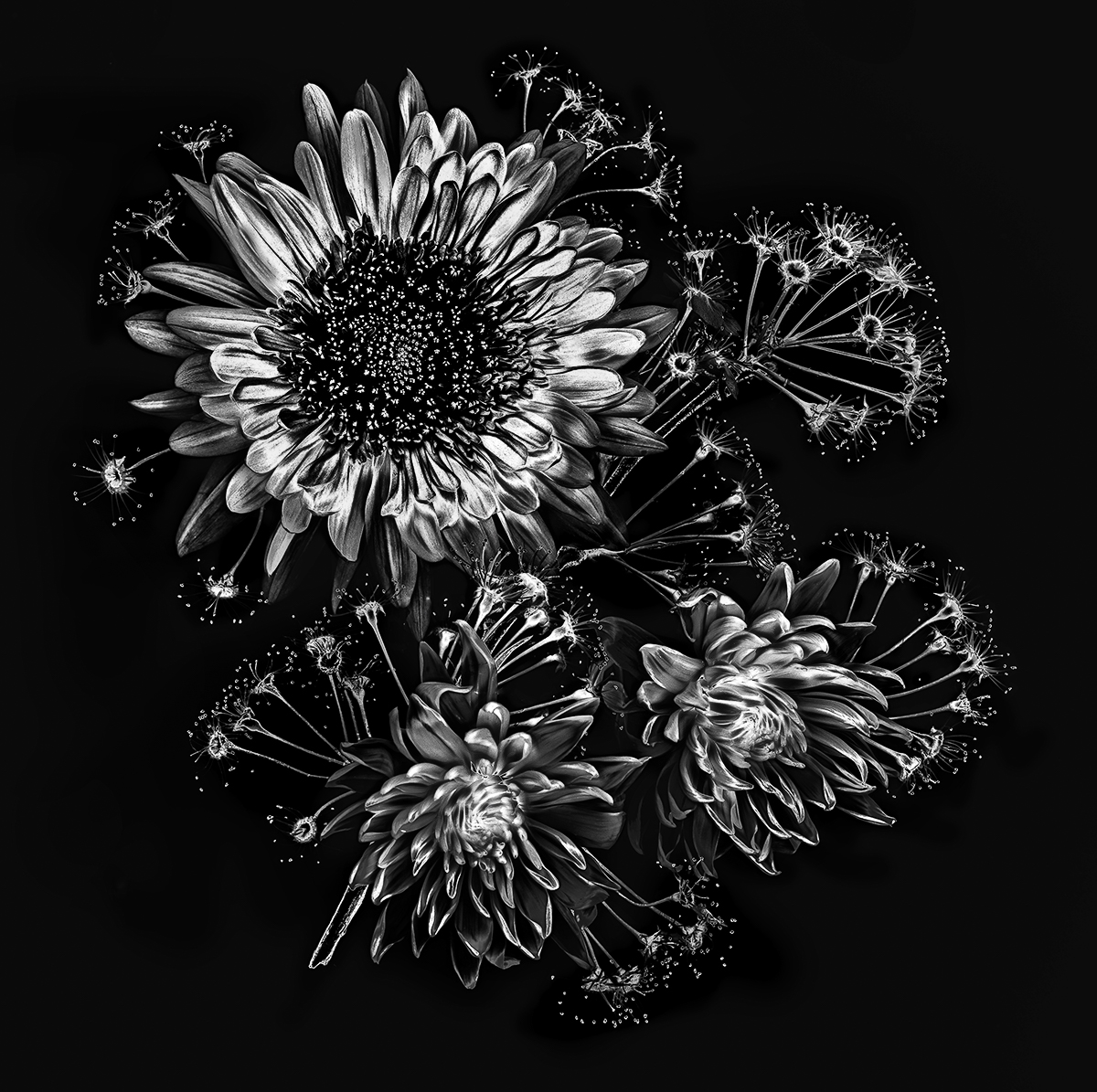 Floral Fireworks in BW