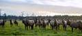 Elk Encounter - Who is Looking at Whom?
