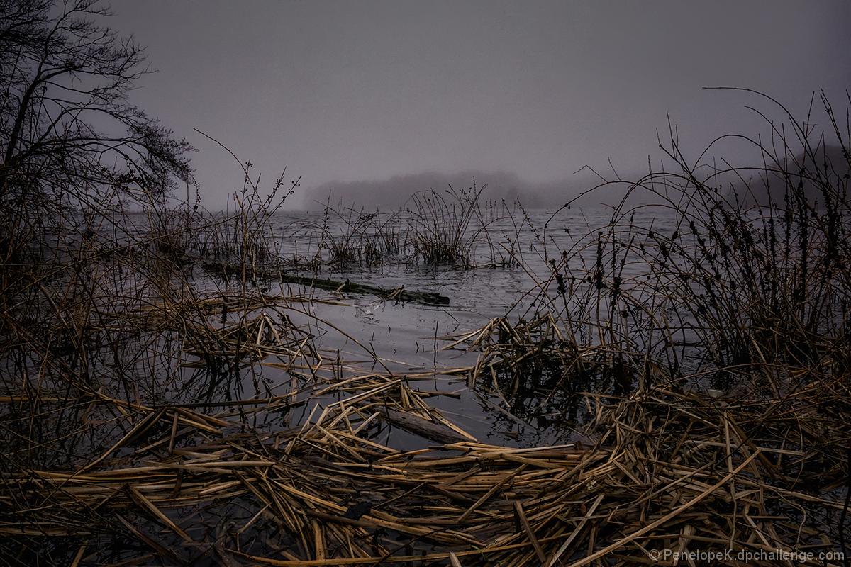 Marsh Wrack