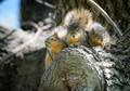 Squirrel Trio.