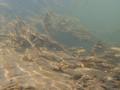Underwater HDR Landscape - Minimal