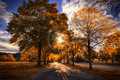 Faux Autumn