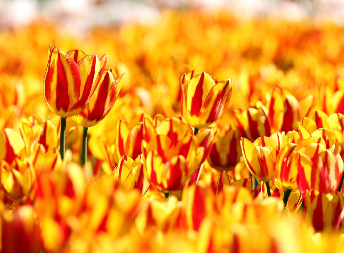 Sunny Orange & Yellow