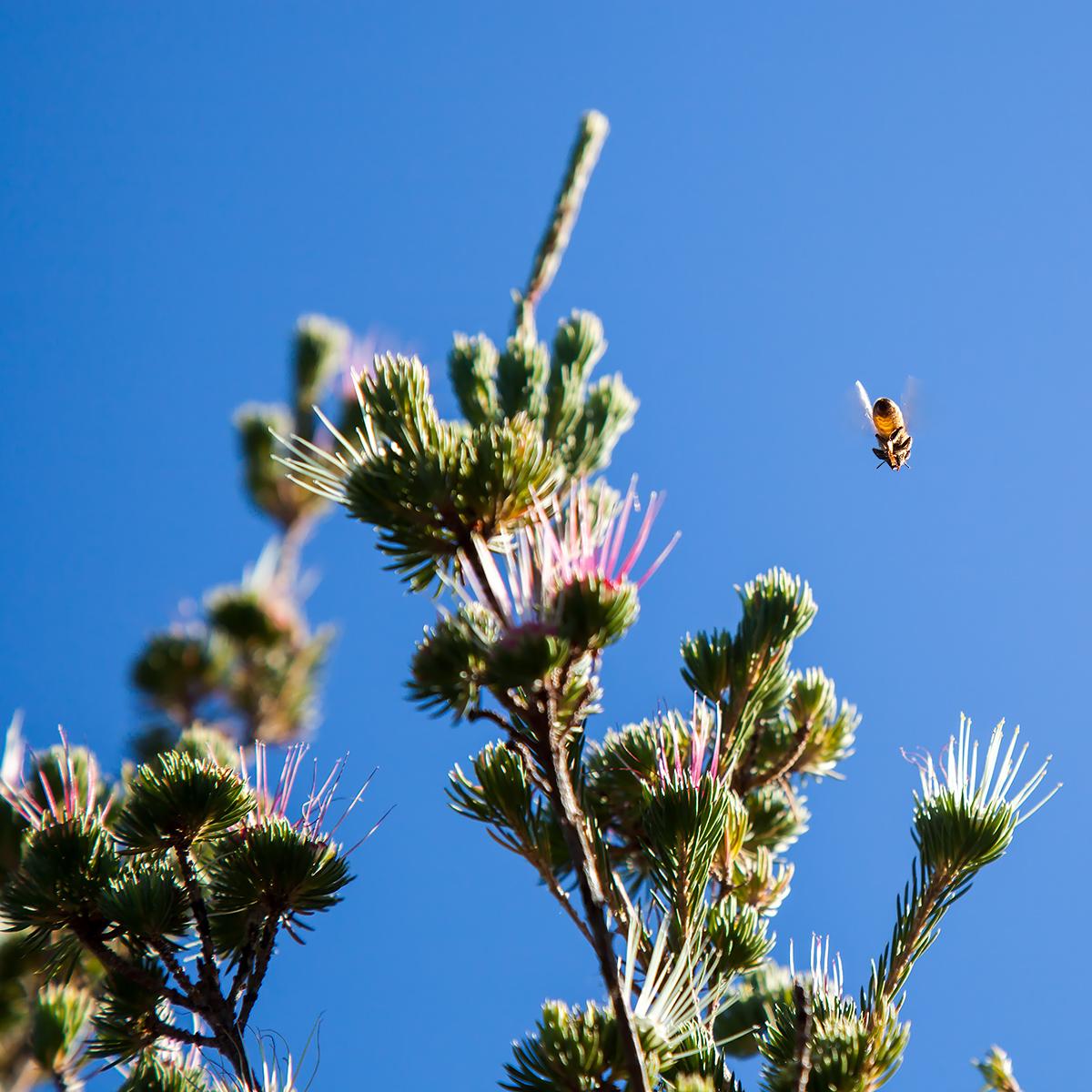 bee-low
