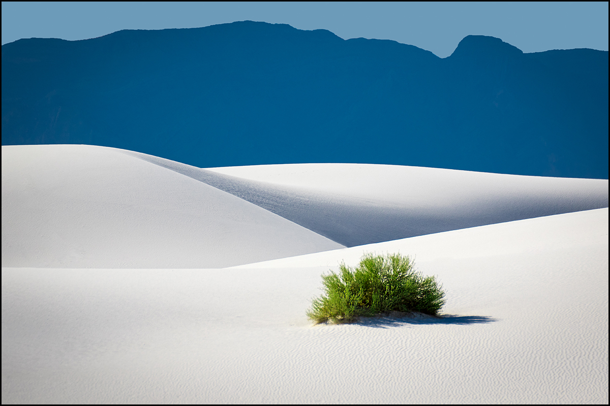 A Bush In White Sands