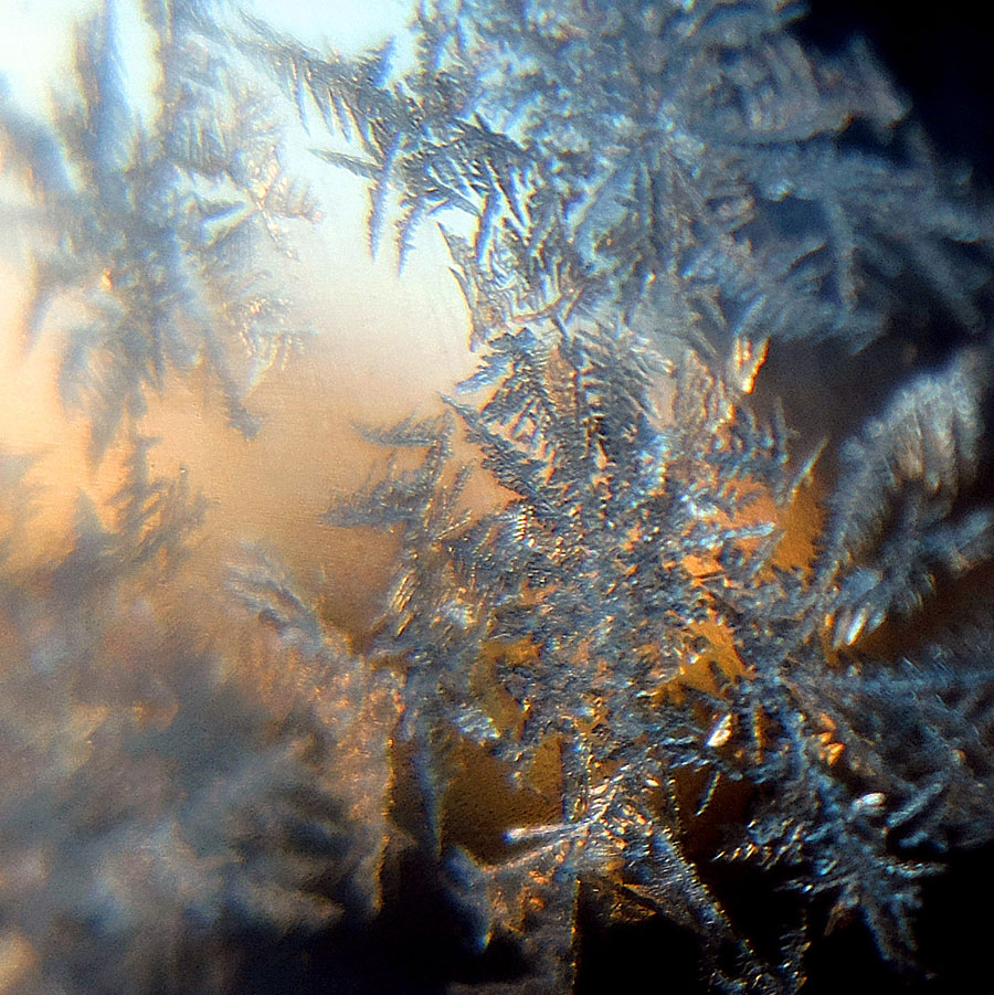 Icy Fronds
