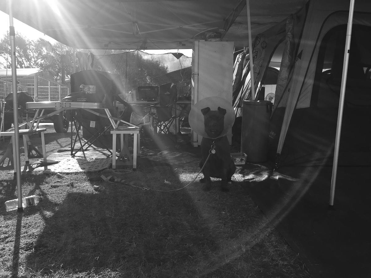 camping at Toowoon Bay circa 1965