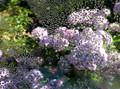 My Garden, Condensed