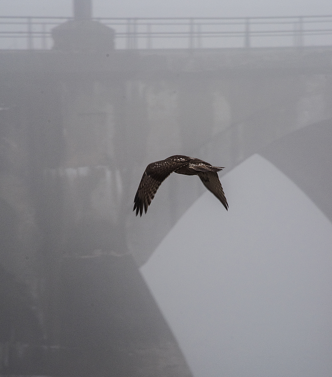 Hunting in the Mist