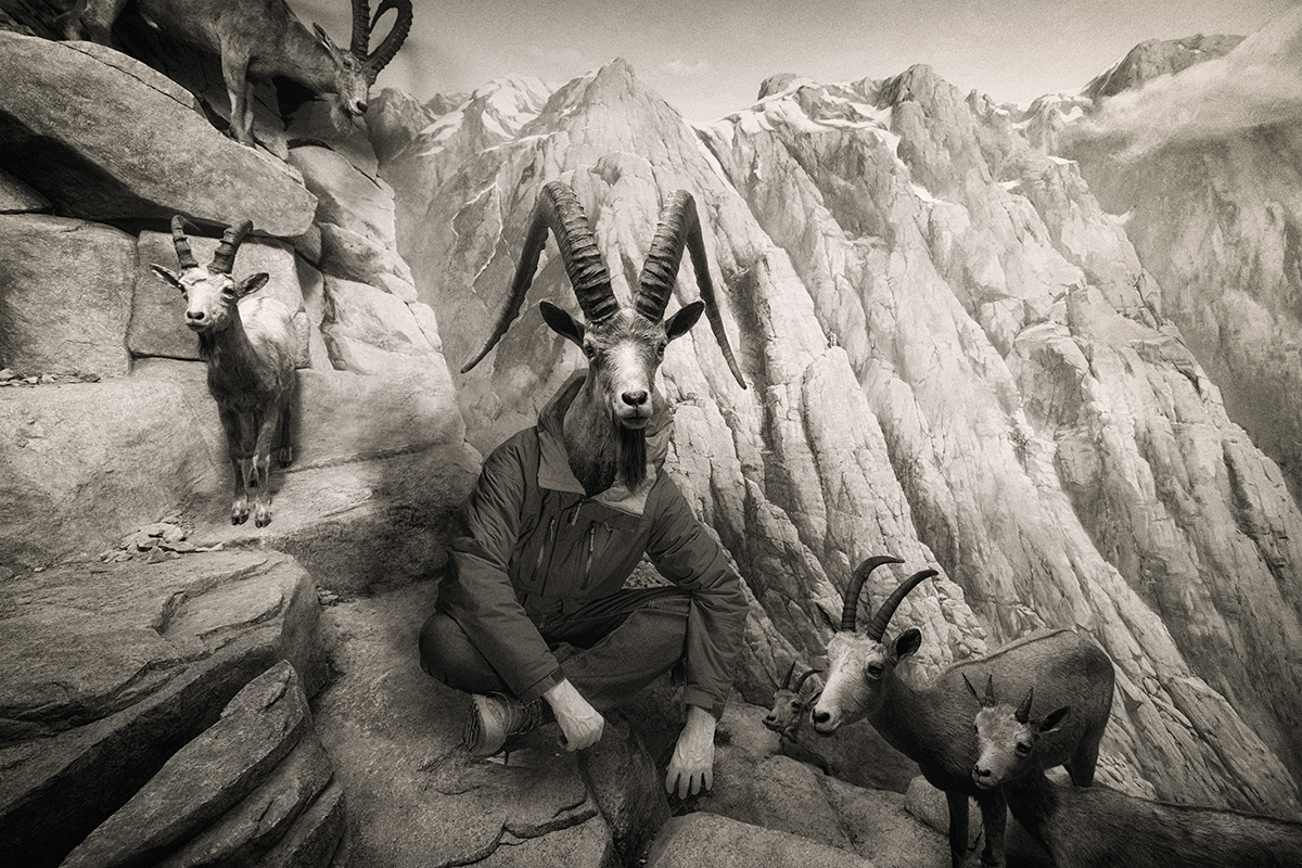 An old mountain goat
