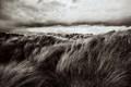 Dunes of grass