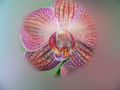 Orchid with spot filter