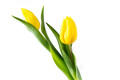 Tulips from...