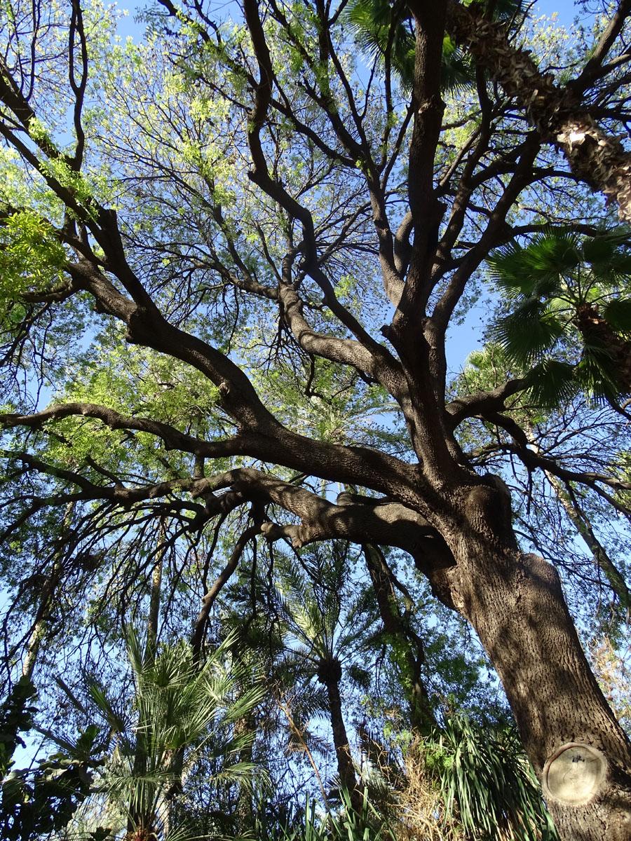 Botanic Garden Yves Saint Laurents Foundation