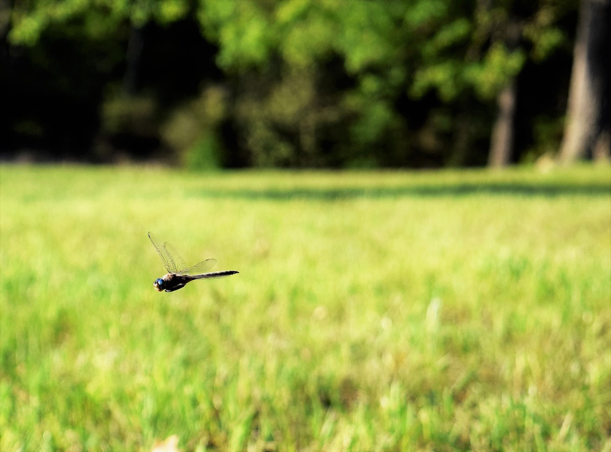 Fly, Dragonfly.