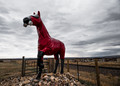 Coldwar Horse
