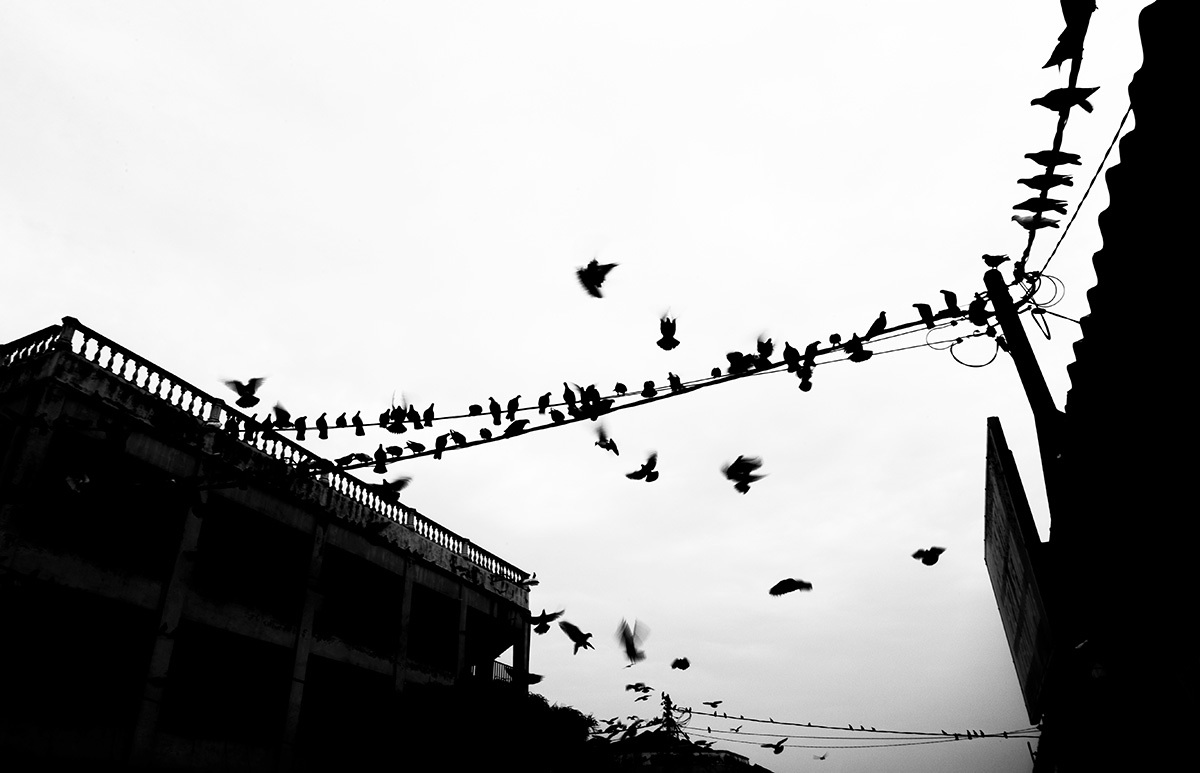 birds sit on Electic wire