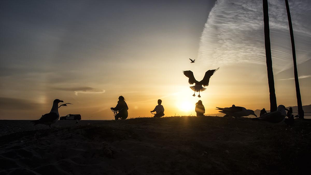 Rush Hour, Gull's-Eye View