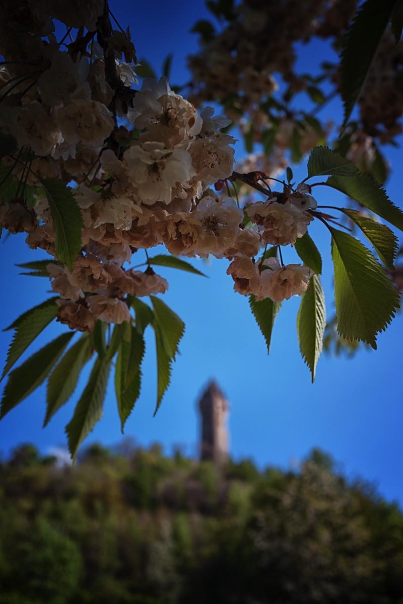 Spring At A Scottish Castle