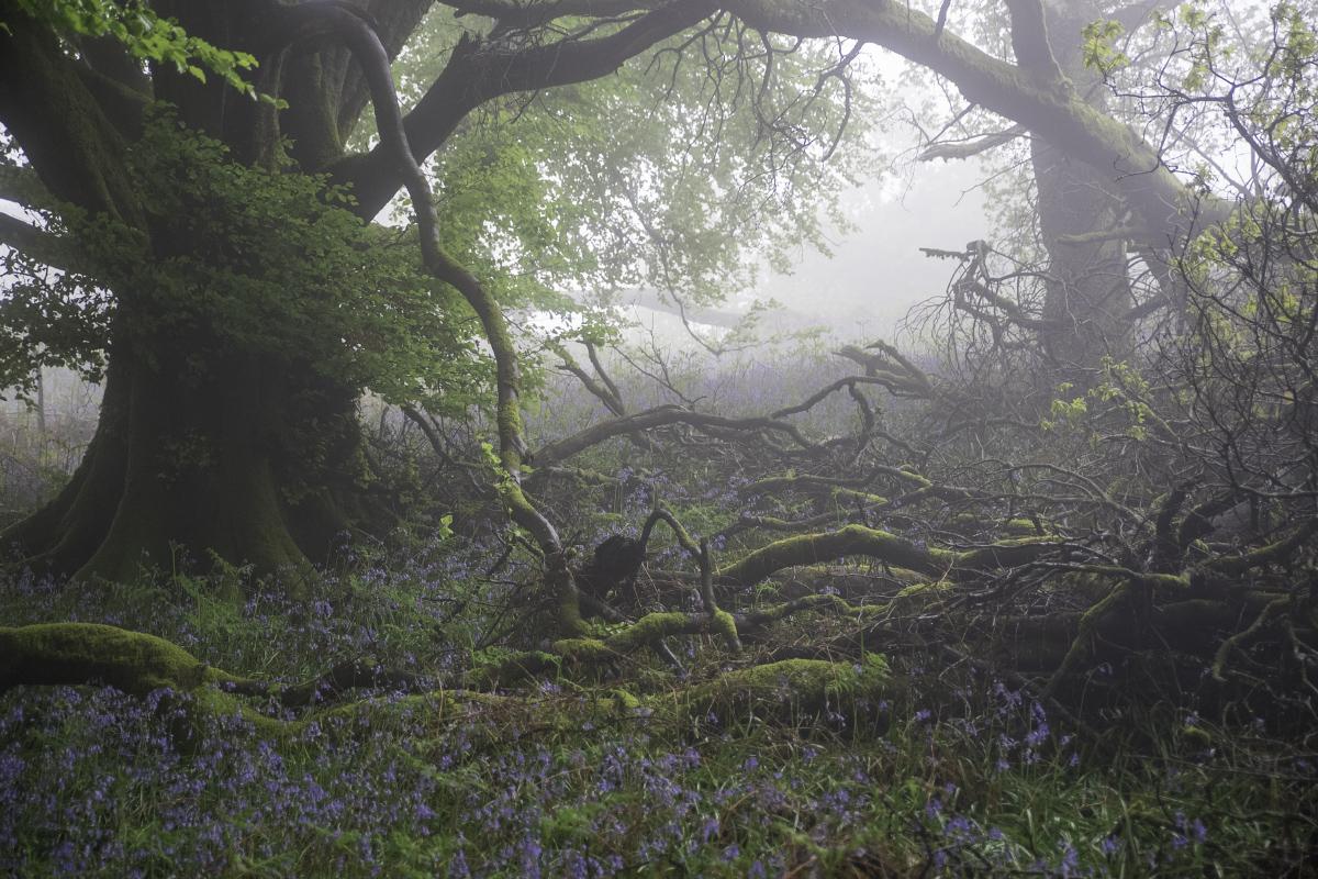 Crummy Fog