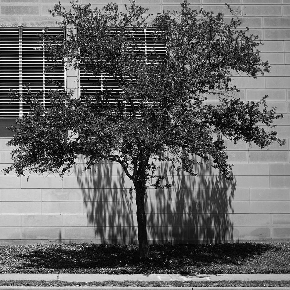 weeping tree - rule of thirds
