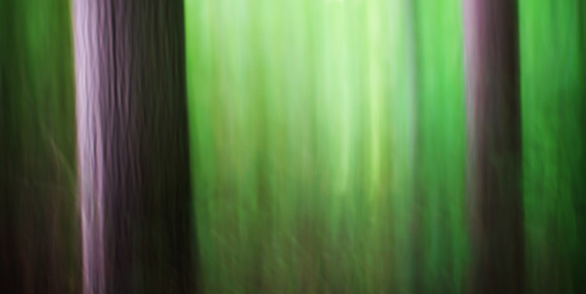 A camera at rest will miss the fluidity of motion ~ seek your own path within the woods.