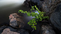 Covfefe-A small plant growing in and around a cove of rocks