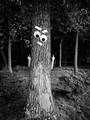 Belligerent Oak