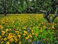 A Fallow Field, a Flood of Flowers