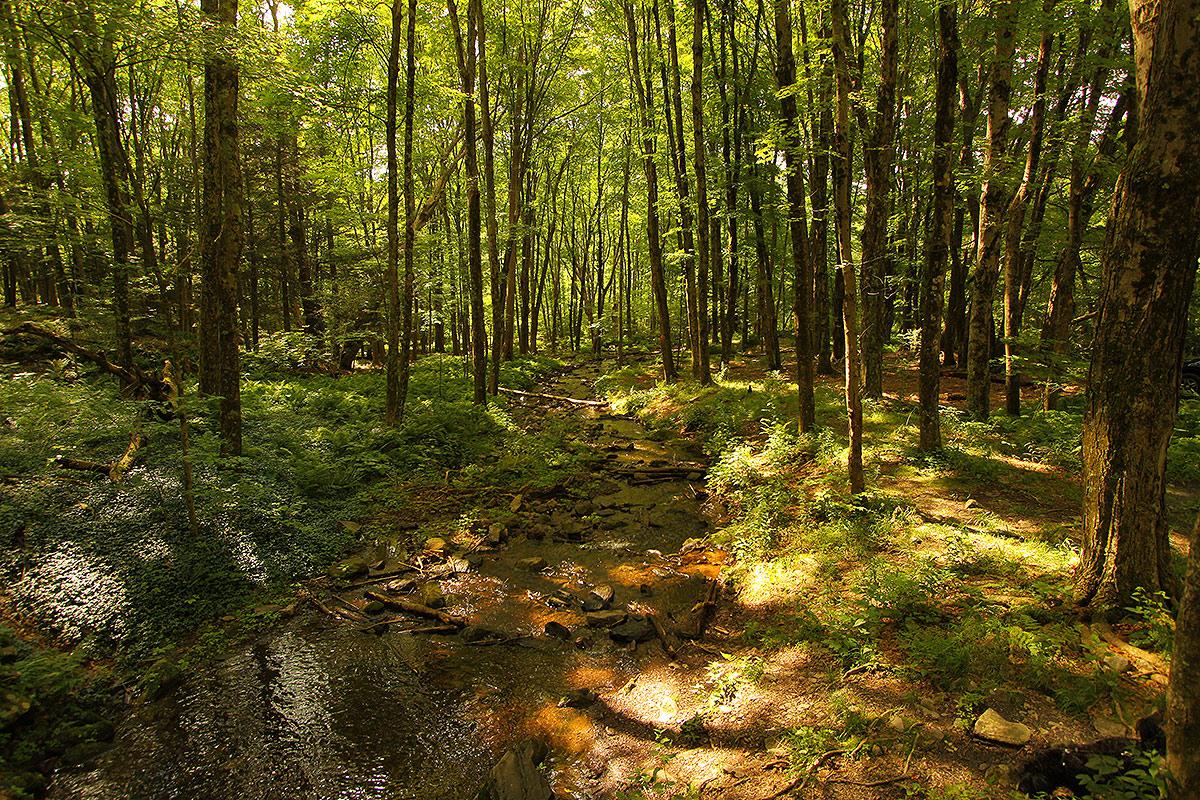 Warm Woods