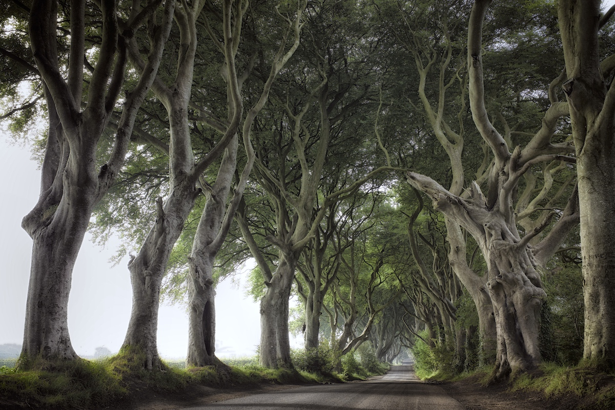 The King's Road