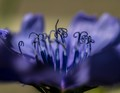 Surreal landscape of a Chickory flower
