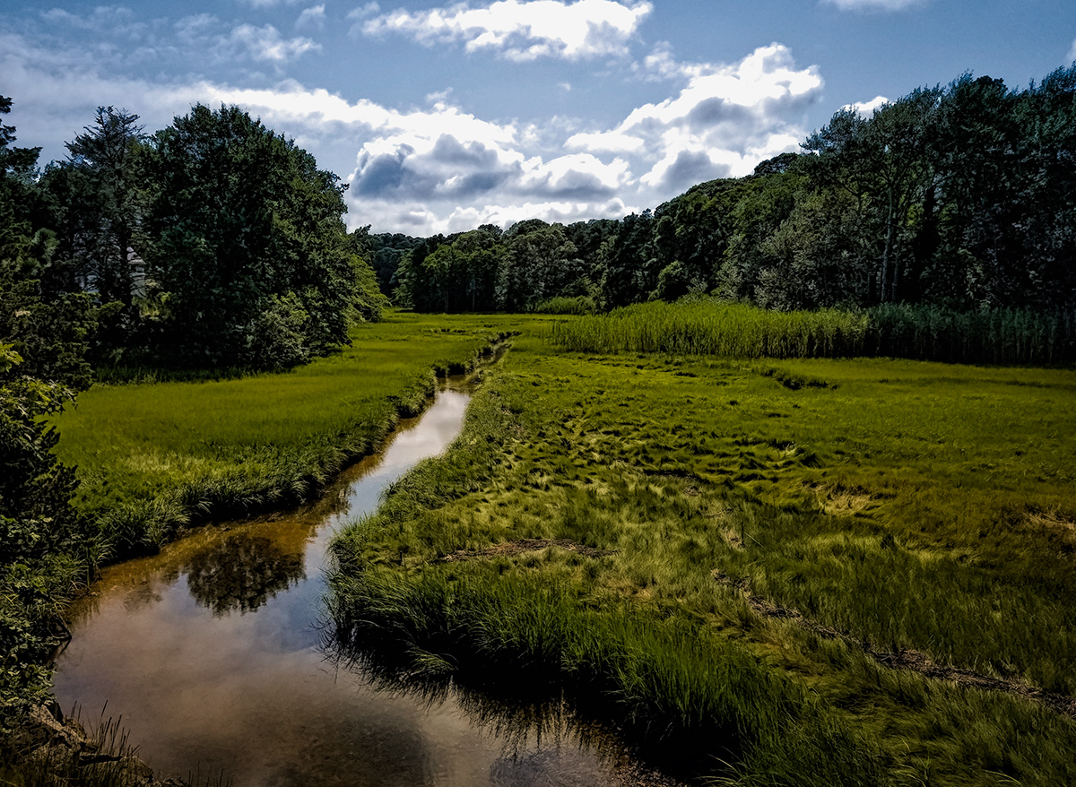 Tidewater Creek, Salt Marsh