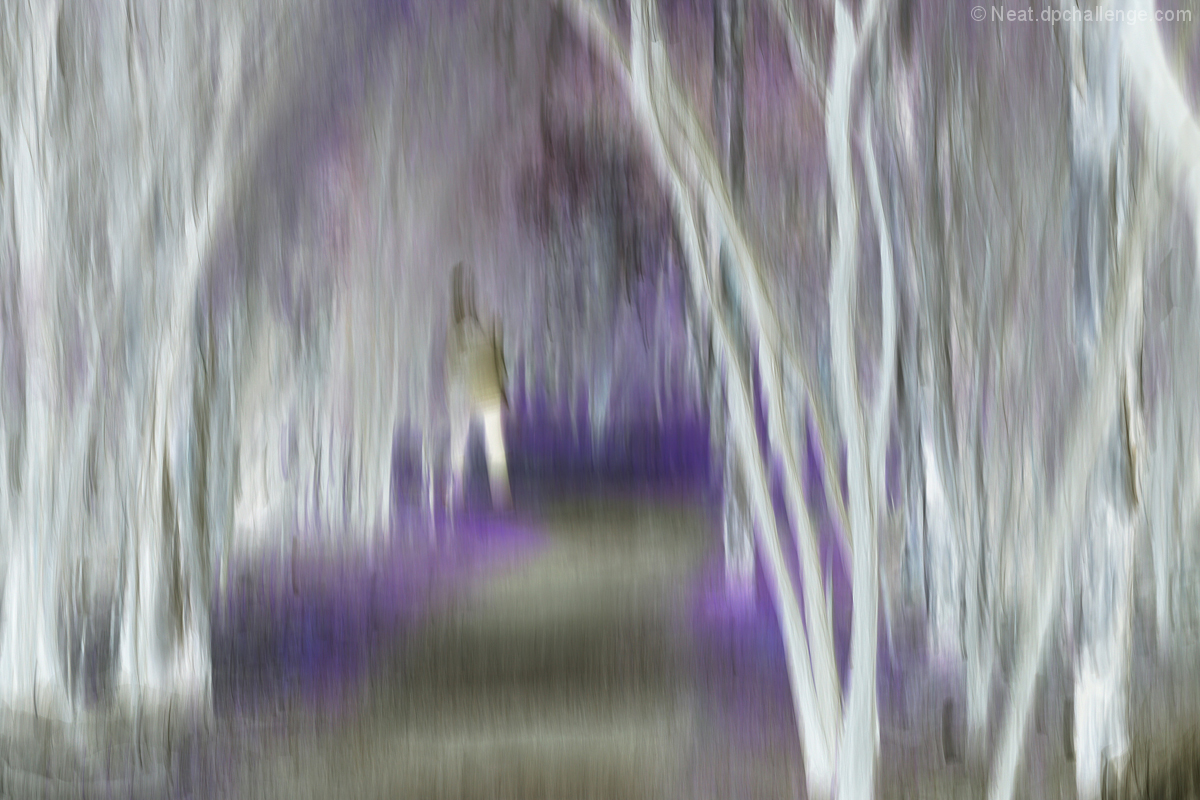 In the lilac forest