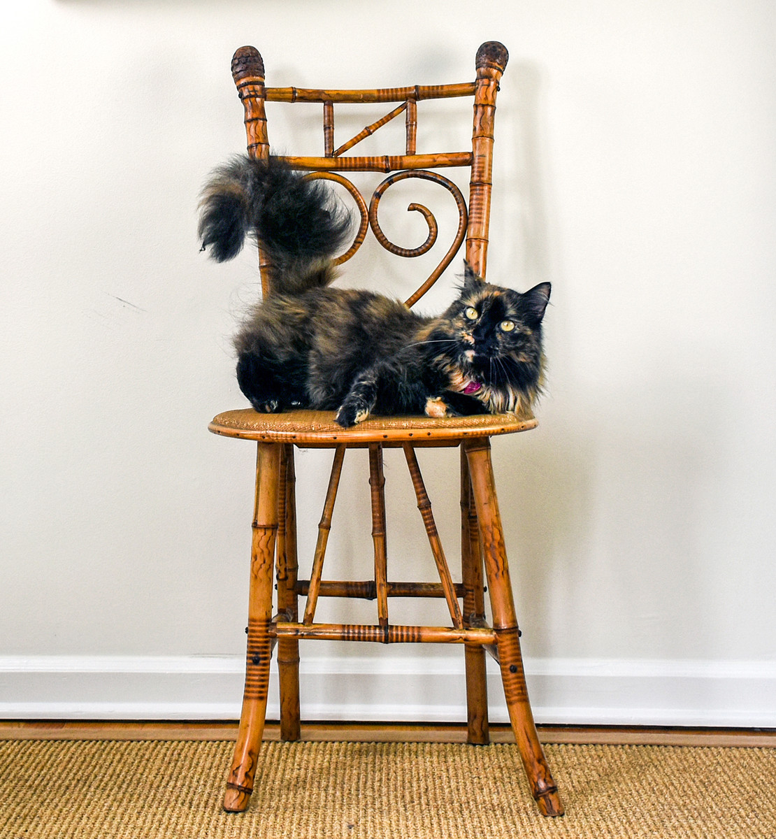 Bamboo Chair; Matching Cat