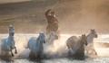 Gallant Horses