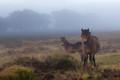 Misty on the moor