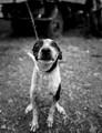 Dog Ma