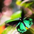 Fabulous Fluttering Tropical Butterflies by DH Patent & KJ Jubb