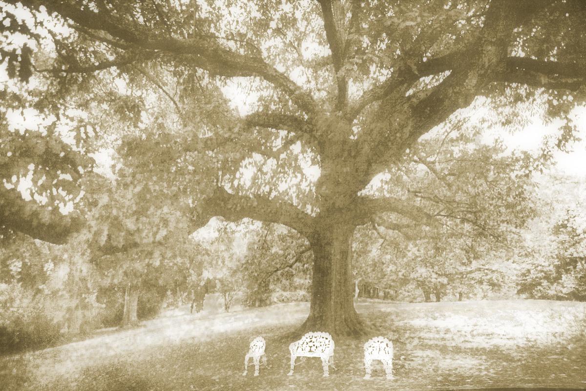 The Towering Oak