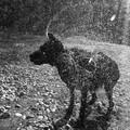 dogscape