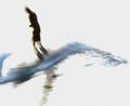 Surfscape