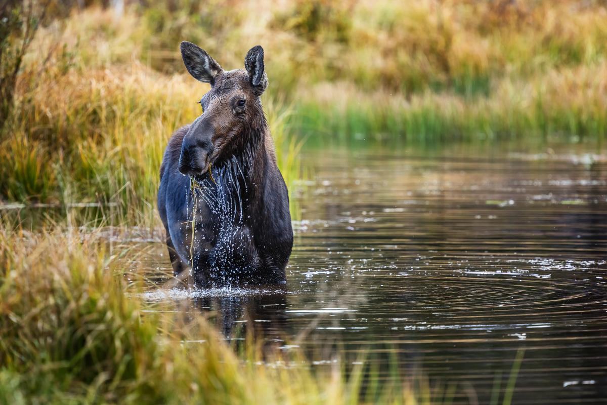 Alert in the Beaver Pond