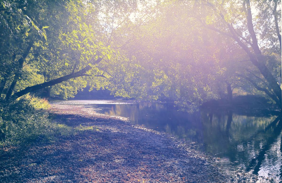 Light in Autumn