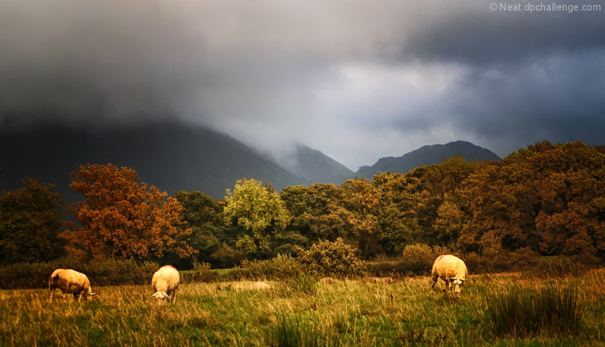 Take me to a quiet place where the sheep graze